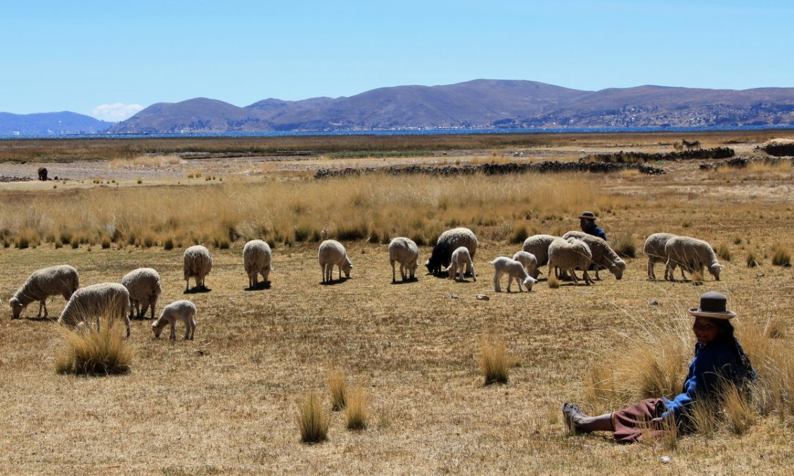 Friendly shepherd lady near colorful Lake Titicaca in Peru.