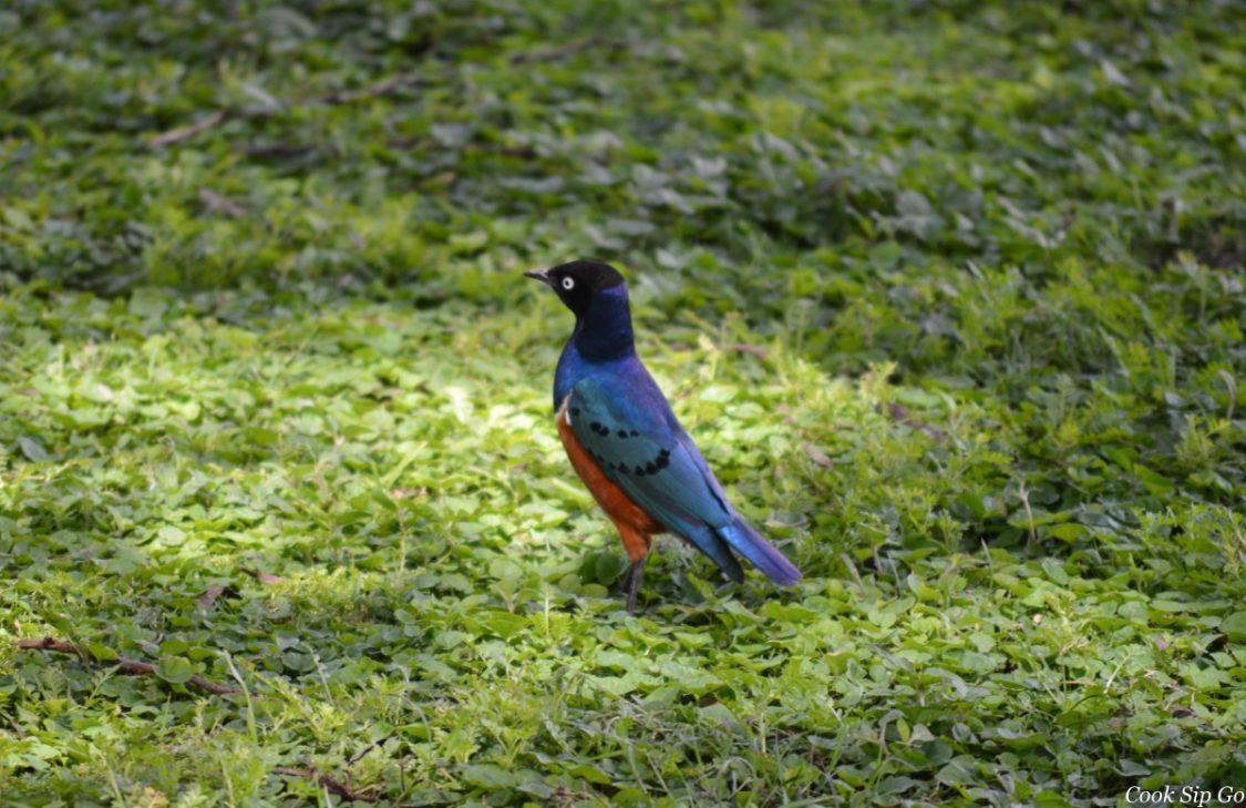 Amboseli - Bird. ©Dave Cole.