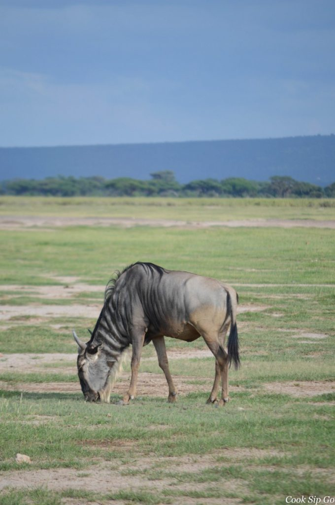Amboseli - Wildebeest. ©Dave Cole.