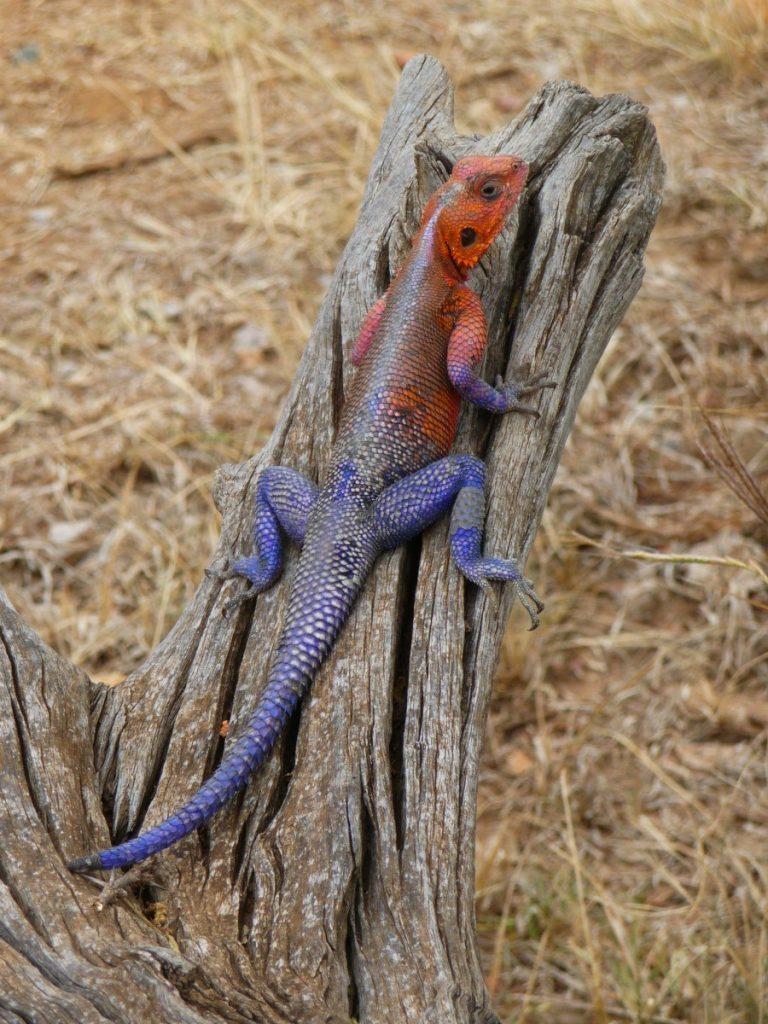 Reptile Kenya. ©Bunch of Backpackers