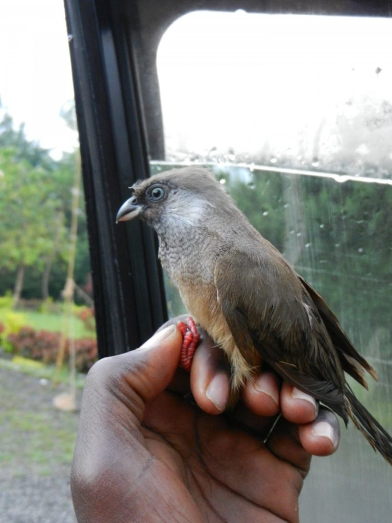 Mousebird in Kenya. ©Bunch of Backpackers.
