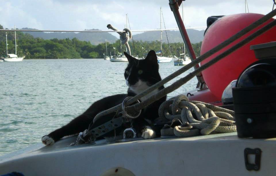 Cat on board. ©Claudia Tavani.