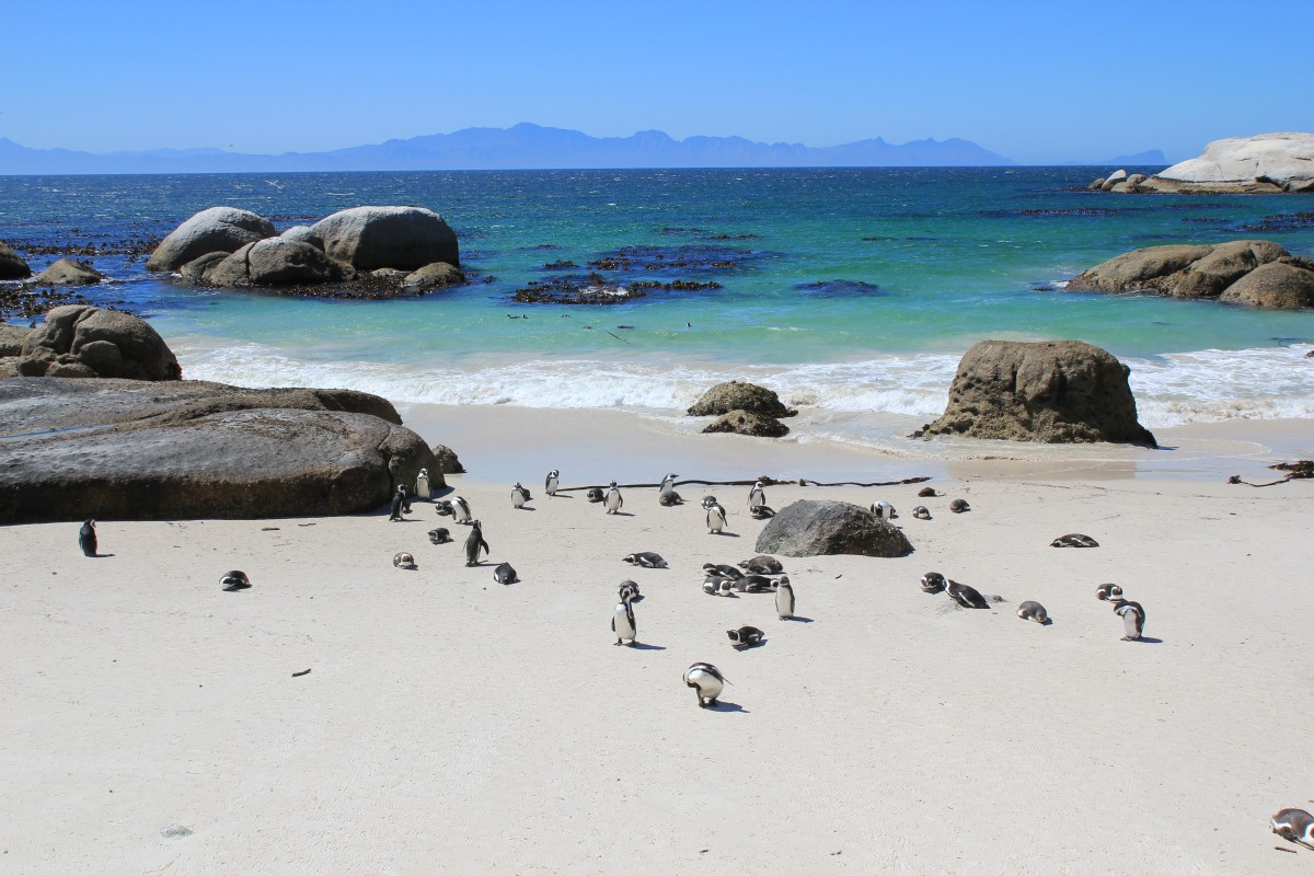 Pinguins on the beach!