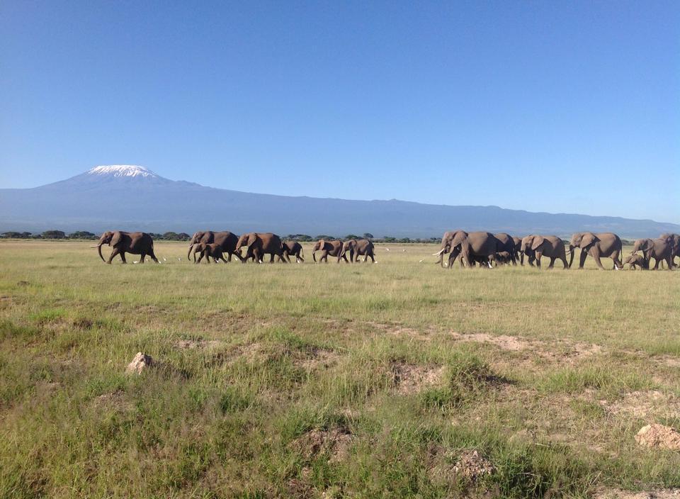 Elephants. ©Joost Reintjes.