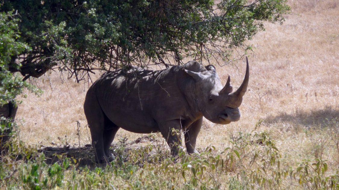 A black rhino at Lake Nakuru. ©Bunch of Backpackers.