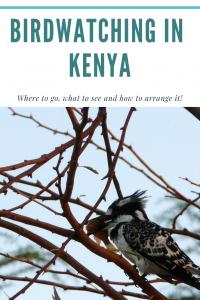 Birdwatching Kenya Africa (1)