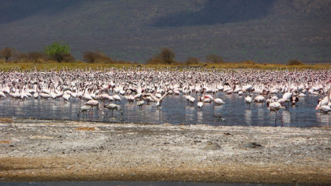 Bogoria flamingo in Kenya by Bunch of backpackers