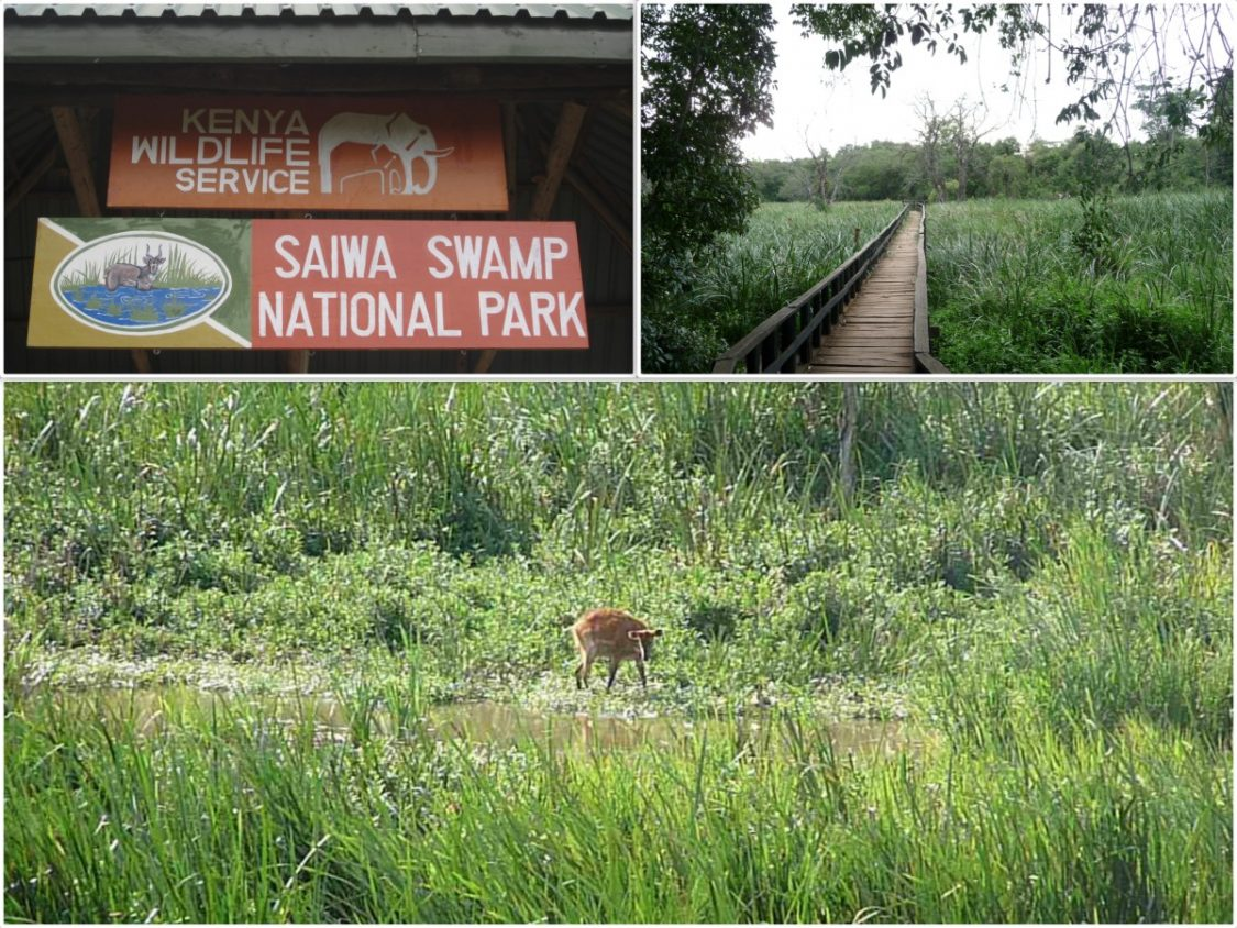 Saiwa swamp kenya by Bunch of Backpackers