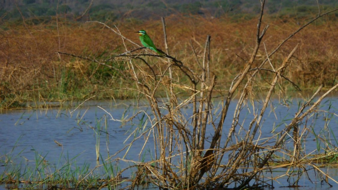 Birdlife Kenya. ©Bunch of Backpackers.