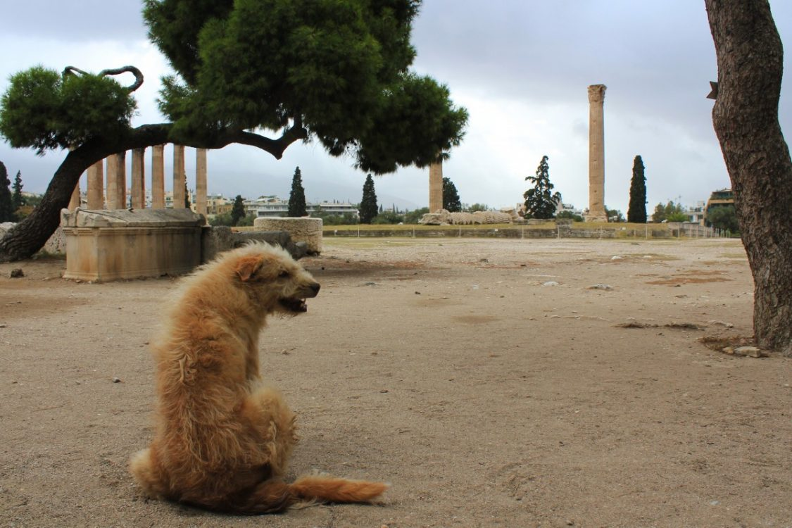 Stray dog at the temple of Olympian Zeus in Athens. ©Bunch of Backpackers.