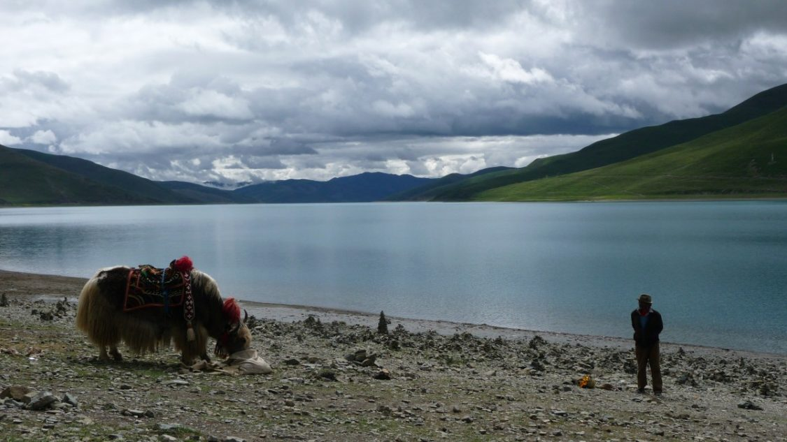 Yak in front of lake Bunch of Backpackers