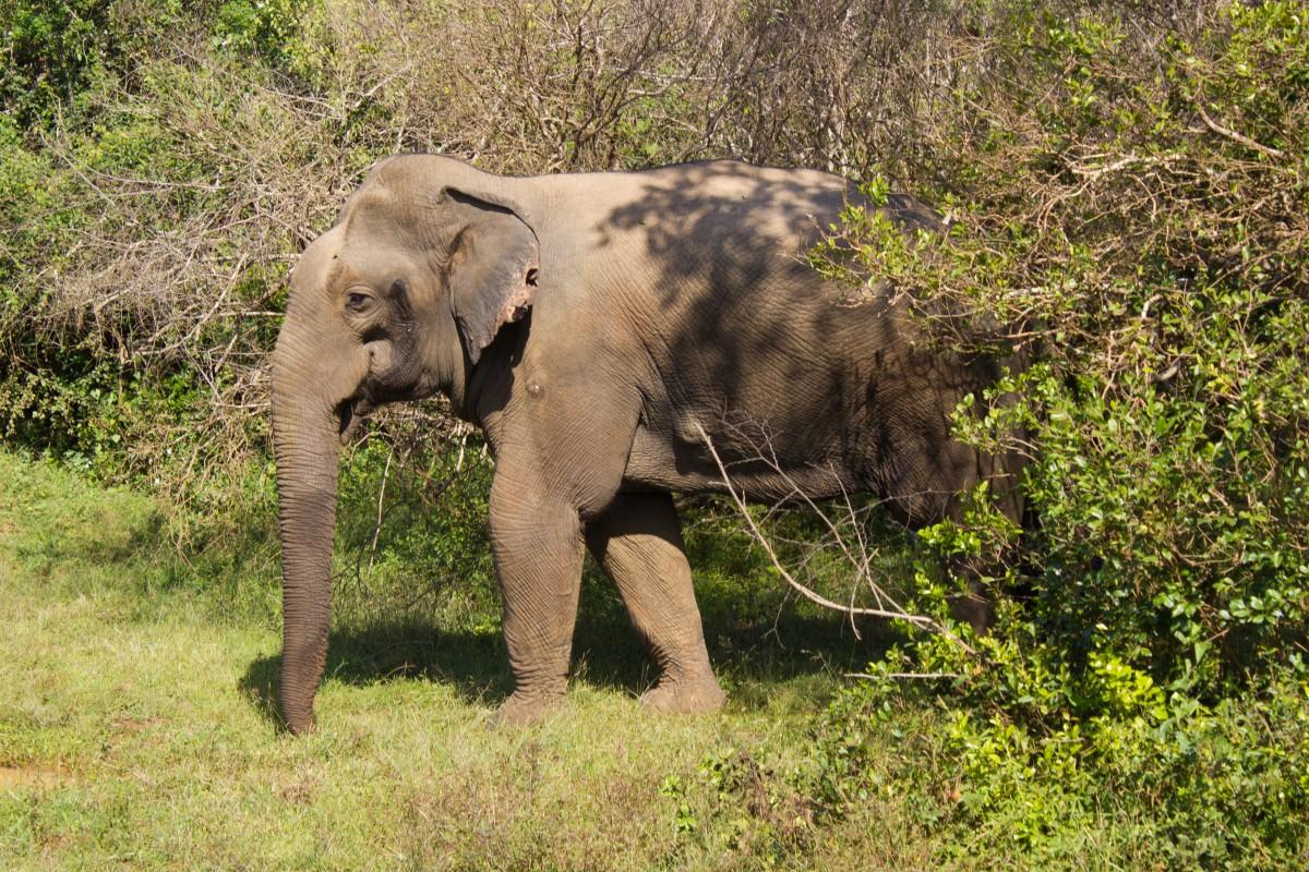 Sri Lanka Bunch of Backpackers-4968