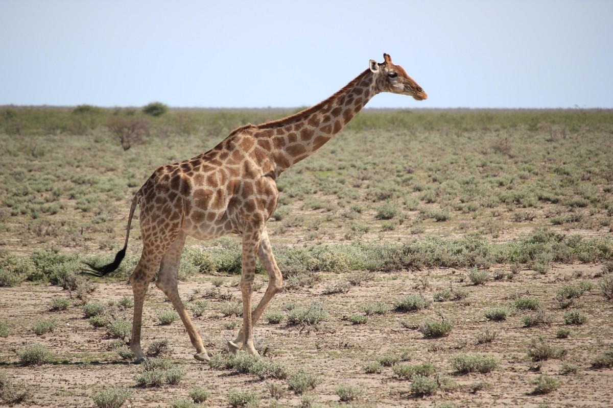 Nomad Tours Namibia