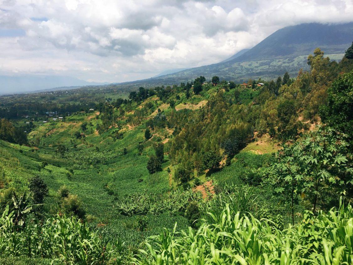 Green hills Rwanda
